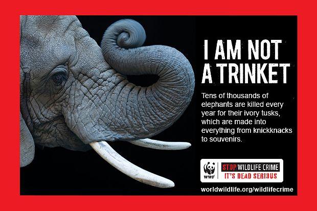 elephant not trinket