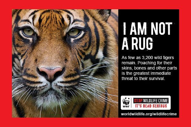 tiger not rug